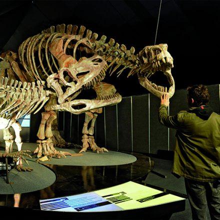 Dinosaurios ischigualasto