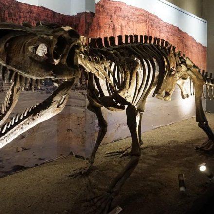 dinosaurios_parque_provincial_ischigualasto